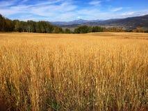 Un campo con un fondo montagnoso in Colorado fotografia stock libera da diritti
