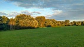 Un campo con gli alberi immagine stock libera da diritti