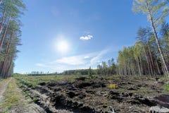 Un campo con la hierba que comenzó a dar vuelta a amarillo y al bosque Sun brillante en el marco fulgor fotografía de archivo