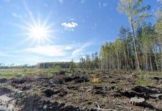 Un campo con la hierba que comenzó a dar vuelta a amarillo y al bosque Sun brillante en el marco fulgor fotos de archivo libres de regalías
