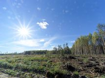 Un campo con la hierba que comenzó a dar vuelta a amarillo y al bosque Sun brillante en el marco fulgor foto de archivo