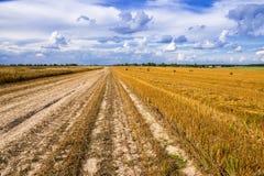 Un campo con le balle della paglia dopo il raccolto Immagini Stock Libere da Diritti