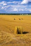 Un campo con le balle della paglia dopo il raccolto Immagine Stock Libera da Diritti