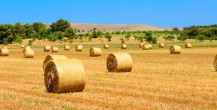 Un campo con le balle della paglia dopo il raccolto come fondo Fotografia Stock