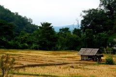 Un campo de arroz del ina de la cabina Fotografía de archivo