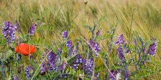 Un campo de flor Opini?n del primer Colores de la primavera y del verano fotografía de archivo libre de regalías