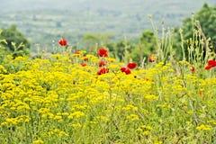 Un campo de flores amarillas y de flores rojas Foto de archivo