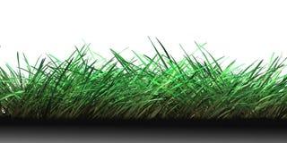 Un campo de la hierba Imagen de archivo libre de regalías