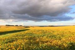 Un campo de la soja casi listo para ser cosechado en una granja en Río Grande del Sur, el Brasil Imagen de archivo
