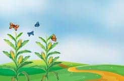 Un campo de maíz en la colina con las mariposas ilustración del vector