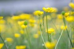 Un campo dei fiori Immagine Stock Libera da Diritti