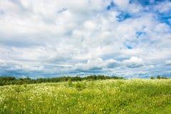 Un campo dei fiori bianchi contro il cielo nuvoloso Fotografia Stock