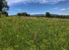 Un campo dei wildflowers e delle montagne delicate nella distanza Fotografie Stock Libere da Diritti