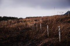 Un campo del abandono de hierbas Imagen de archivo libre de regalías
