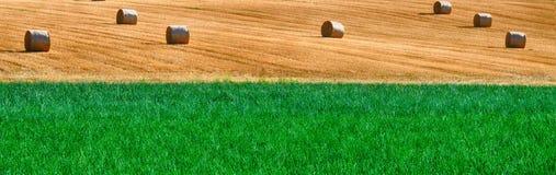 Un campo dell'agricoltura di due tipi ha spaccato dalla linea orizzontale naturale Fotografie Stock