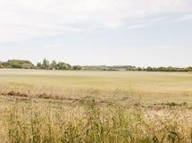 Un campo dell'azienda agricola di crescita esterna del raccolto dell'erba del grano con il blu e la c Immagine Stock Libera da Diritti