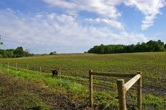 Un campo dell'azienda agricola nel Minnesota Fotografia Stock Libera da Diritti