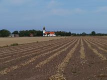 Un campo della cipolla in Smedby su Oland Immagine Stock