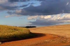 Un campo della soia quasi pronto ad essere raccolto ed un altro già ha raccolto in grande fa Sul, Brasile Immagine Stock