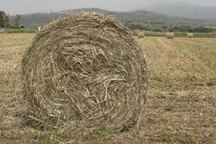 Un campo destrozado del forraje Rueda Foto de archivo libre de regalías