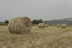 Un campo destrozado del forraje Rueda Fotografía de archivo