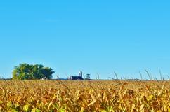 Un campo di cereale. Immagine Stock Libera da Diritti