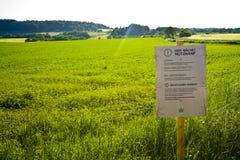 Un campo en Hesse, m Alemania del cáñamo Cultivo legal del cáñamo para la medicina o la comida imagenes de archivo