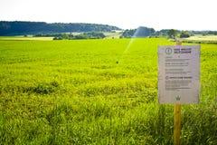 Un campo en Hesse, m Alemania del cáñamo Cultivo legal del cáñamo para la medicina o la comida fotografía de archivo