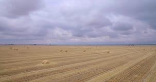 Un campo enorme de la hierba segada almacen de video