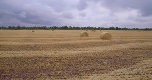 Un campo enorme de la hierba segada metrajes