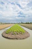 Un campo fertile dell'azienda agricola della lattuga deve essere irrigato. Fotografia Stock Libera da Diritti