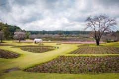 Un campo in giardino di Ushiku Daibutsu, Giappone immagini stock libere da diritti