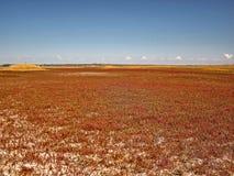 Un campo insolito, un paesaggio luminoso Fotografia Stock