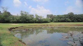 un campo perfetto del campo da golf dell'erba alla HK stock footage