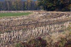 Un campo raccolto Fotografia Stock Libera da Diritti