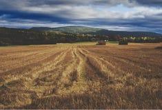 Un campo raccolto in Norvegia Fotografia Stock Libera da Diritti