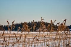 Un campo raccolto sotto neve Fotografie Stock Libere da Diritti