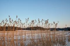 Un campo raccolto sotto neve Immagine Stock Libera da Diritti