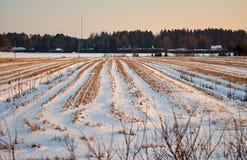 Un campo raccolto sotto neve Fotografia Stock Libera da Diritti