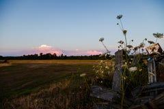 Un campo rurale dell'azienda agricola con i wildflowers nella priorità alta e nel tramonto si appanna nella distanza fotografie stock libere da diritti