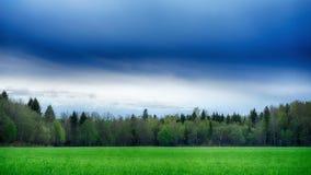Un campo sparso con l'estate della foresta e dell'erba abbellisce fotografia stock
