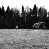 Un campo vacío Foto de archivo