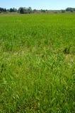 Un campo verde Fotografia Stock Libera da Diritti