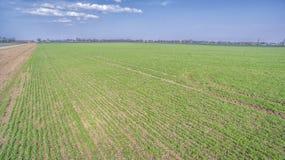 Un campo verde di agricoltura Fotografia Stock Libera da Diritti