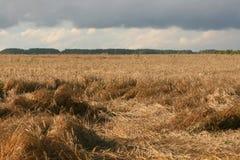 Un campo wheaten fotografia stock libera da diritti