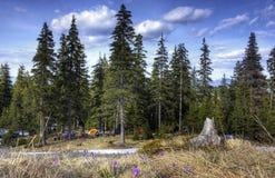 Un campsite è in montagne Fotografia Stock