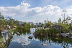 Un canal de la trayectoria un bosque del cattail a lo largo de un arroyo en Lijiang, Yunnan, China imagen de archivo
