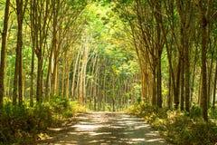 Un canal en la plantación de goma Imagen de archivo libre de regalías