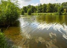 Un canal hermoso y un revestimiento del bosque en la ciudad holandesa de Vlaardingen imágenes de archivo libres de regalías