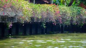 Un canale marcio dell'acqua, la contaminazione dei corpi dell'acqua immagine stock libera da diritti